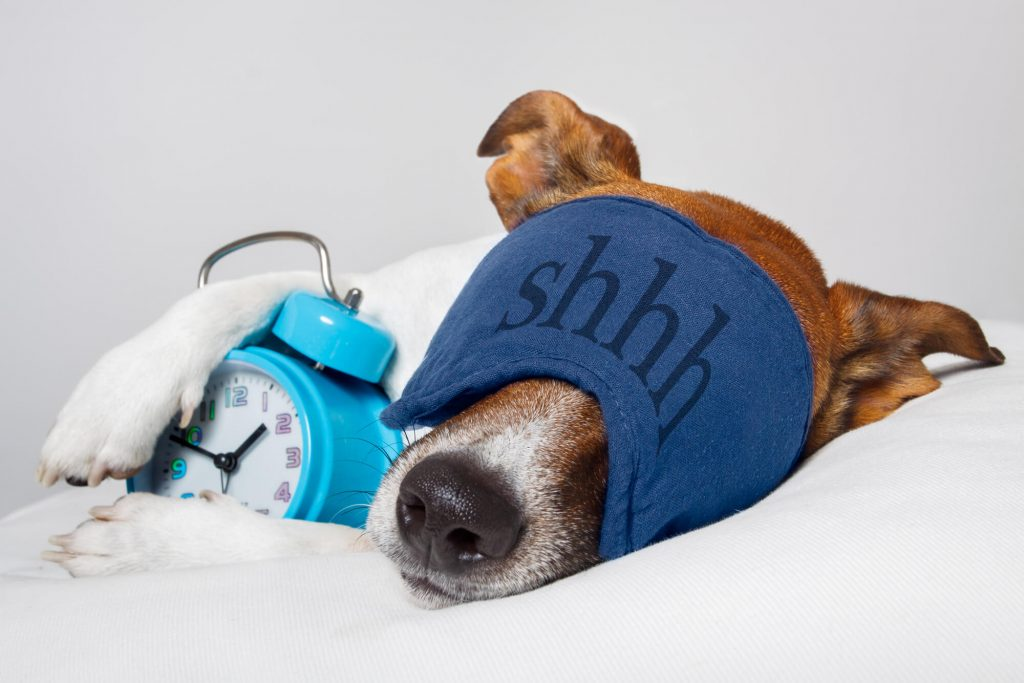 wake up early dog with clock